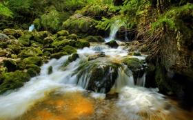 Картинка мох, река, деревья, лес, вода, камни