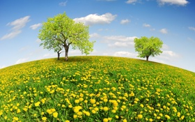 Картинка поле, небо, деревья, весна, луг, sunshine, одуванчики
