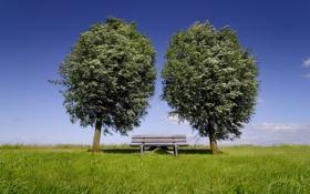 Картинка лето, небо, дерево, ветер, лавка, два