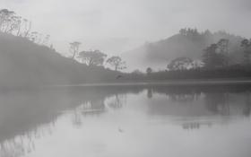 Картинка деревья, туман, озеро, отражение, холмы, птица