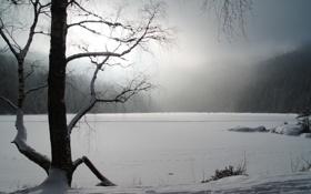 Обои зима, снег, деревья, природа, фото, фон, пейзажи