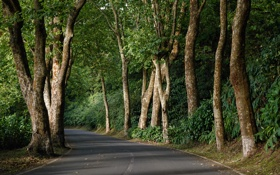 Картинка дорога, зелень, лес, деревья, Португалия, Azores