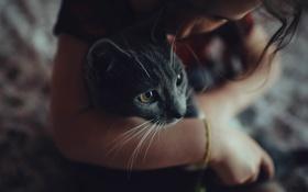 Обои кошка, взгляд, руки, мордочка, девочка, серая