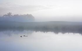 Обои небо, вода, облака, деревья, туман, озеро, пруд