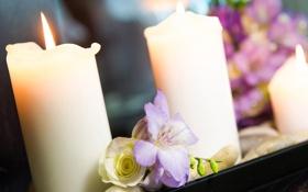 Обои цветы, букет, свечи, свадьба, боке