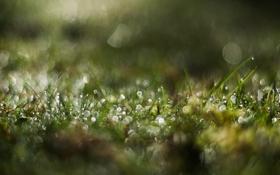 Картинка трава, зеленый, роса
