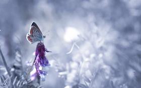 Картинка природа, фон, бабочка, цвет
