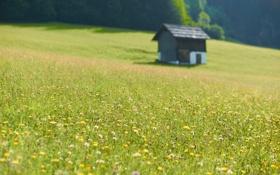 Обои поле, цветы, природа, фото, поля, дома, фокус