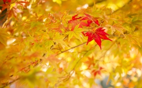 Обои листья, осень, природа, цвет