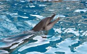 Обои море, животные, дельфин
