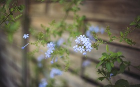 Картинка цветок, лепестки, голубые