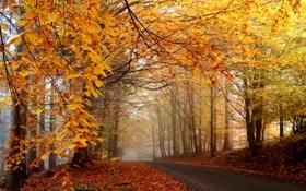 Картинка дорога, деревья, туман, листва, оранжевая, жёлтая, осенняя