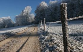 Картинка деревья, дорога, иней, природа, снег, зима