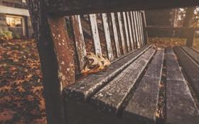 Обои осень, листья, скамейка