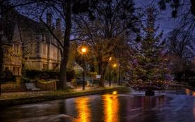 Обои Water, night, Christmas tree, Bourton