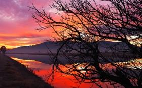 Картинка закат, небо, зарево, силуэт, горы, озеро, дерево