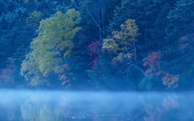 Картинка лес, деревья, туман, озеро