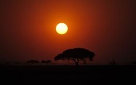 Обои солнце, закат, дерево, африка