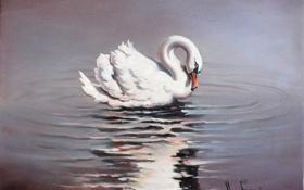 Картинка белый, вода, отражение, лебедь, живопись