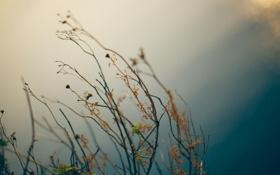 Обои фото, травы, сухие, цвет, обои, природа, картинка