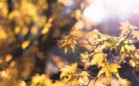 Обои осень, листья, солнце, макро, свет, блики, жёлтый