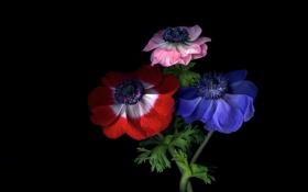 Обои свет, цветы, тень, радуга, лепестки