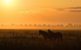 Обои поле, ночь, природа, туман, кони