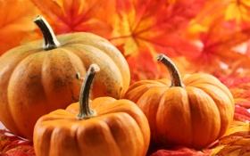 Обои осень, листва, тыква, autumn, leaves, pumpkin
