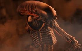 Обои игрушка, существо, Чужой, статуэтка, Alien, тварь, Xenomorph