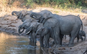 Обои природа, слоны, водопой