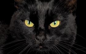 Картинка кот, cat, кошка