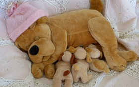 Картинка щенки, шапочка, игрушка, собака