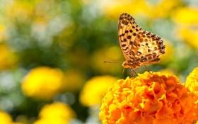 Обои фото, бабочка, цвета, боке, цветок, день, яркие