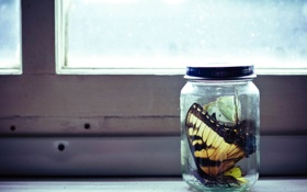 Картинка бабочки, окно, банка, макро. стол