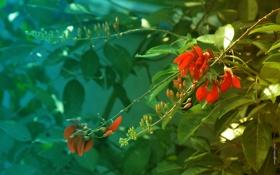 Обои зелень, листья, цветы, фото, обои, весна, ярко
