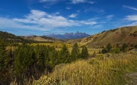 Обои горы, поля, США, леса, национальный парк, Grand Teton