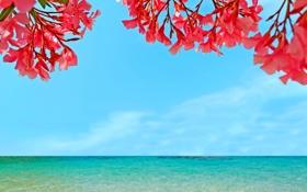 Обои море, небо, пейзаж, цветы