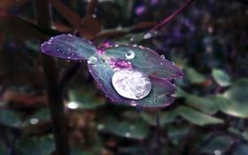 Картинка листья, зелёный, трава, капля, после дождя, макро