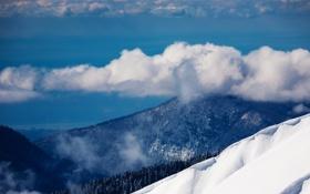 Обои зима, облака, снег, деревья, пейзаж, природа, обои