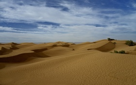 Картинка кусты, пустыня, небо, барханы