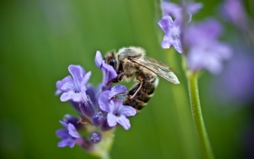 Обои зелень, поле, цветок, фиолетовый, лето, макро, природа