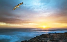 Картинка море, пляж, солнце, скалы, рассвет, чайка