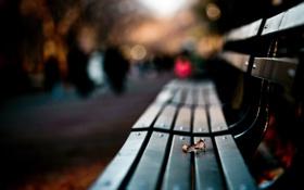 Обои осень, лист, парк, аллея, сквер, скамья