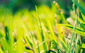Обои зелень, трава, солнце