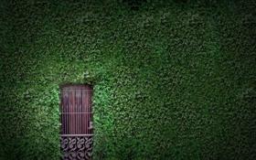 Обои зелень, листья, стена, листва, растения, дверь