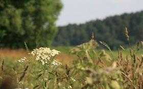 Обои макро, цветы, природа, река, растения, утро