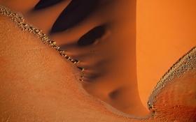 Обои wide, sand, orange, bush, Desert, umbra