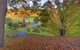 Картинка дорога, осень, листья, деревья, дома