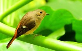 Обои лист, птица, ветка, перья, хвост