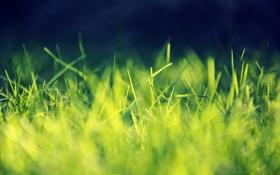 Обои зелень, трава, макро